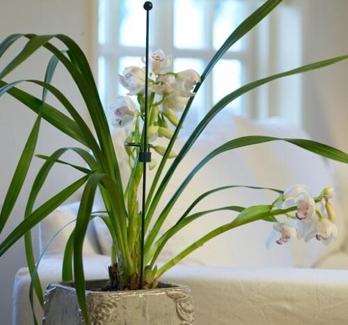 PEACOCK Indoor Mini-Bodenstab 40cm | Gartendekoration ...  PEACOCK Indoor ...